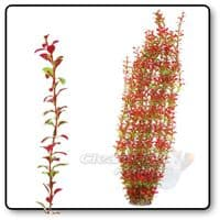 XL Plant 95cm Tall Green/Red Type 6