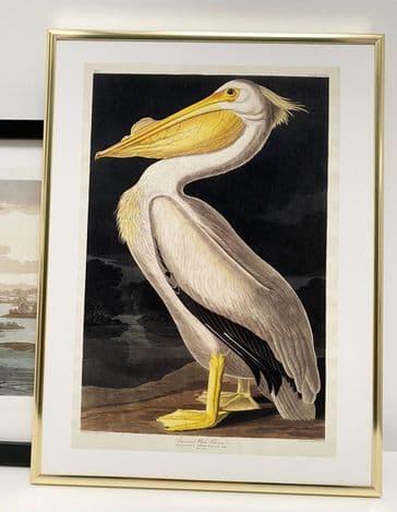 American White Pelican (30x40cm portrait)