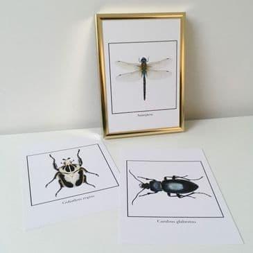 "Bugs SET OF 3 (5x7"" prints)"