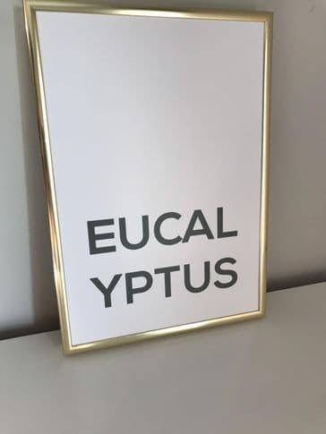 Eucalyptus (A4 GREEN)