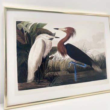 Purple Heron  (30x40cm landscape)