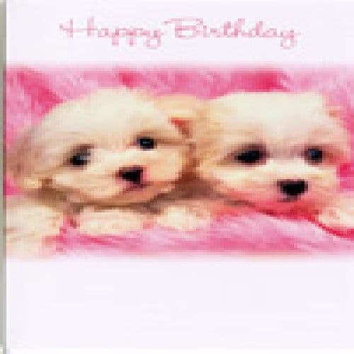 'Happy Birthday Card with two small dogs by Simon Elvin