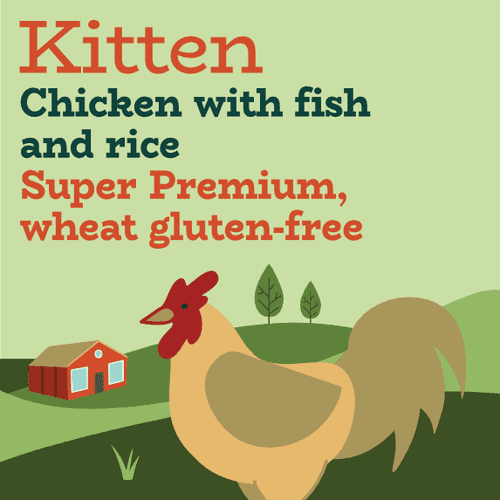 High protein sensitive kitten food with fish and chicken