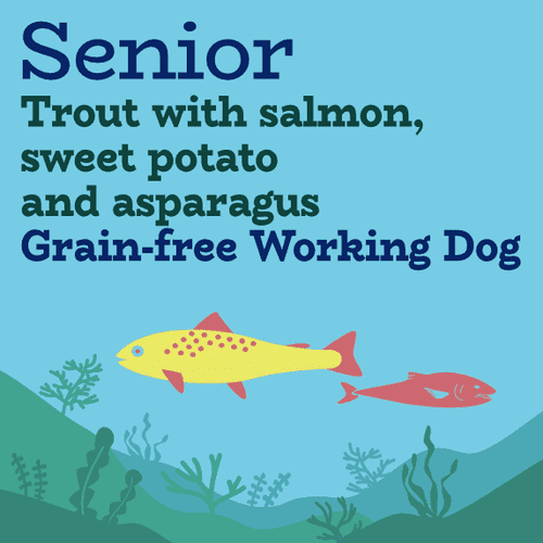 Senior light trout, salmon, sweet potato with asparagus for working dogs